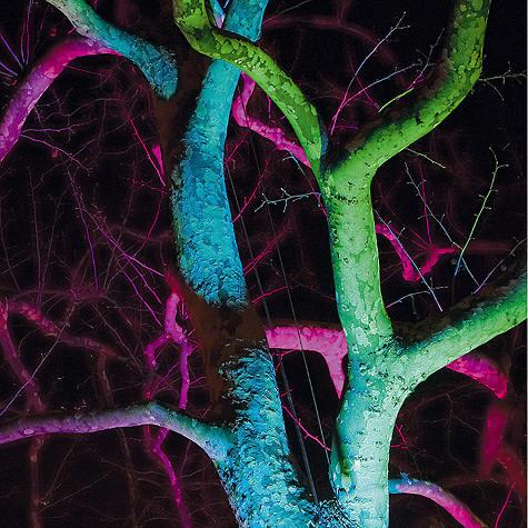 color-tree